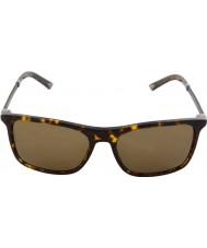 Dolce and Gabbana DG4242 56 Basalto Collection Havana 502-731 Sunglasses