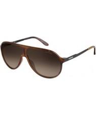 Carrera New Champion 8F8 HA Havana Black Sunglasses