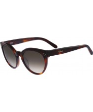 Chloe Ladies CE691S Boxwood Havana Sunglasses